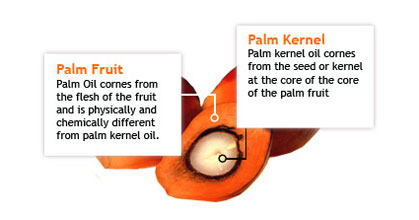what is palm kernel